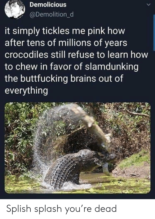 Brains, How To, and Pink: Demolicious  @Demolition_d  it simply tickles me pink how  after tens of millions of years  crocodiles still refuse to learn how  to chew in favor of slamdunking  the buttfucking brains out of  everything Splish splash you're dead