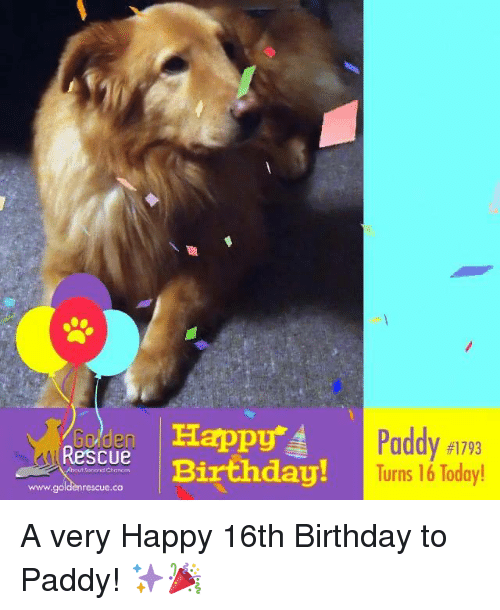 25+ Best Memes About Happy 16Th Birthday