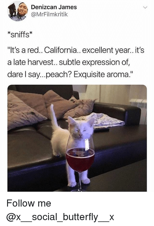 "Memes, Butterfly, and California: Denizcan James  @MrFilmkritik  *sniffs*  ""It's a red.. California.. excellent year.. it's  a late harvest.. subtle expression of,  dare l say...peach? Exquisite aroma."" Follow me @x__social_butterfly__x"