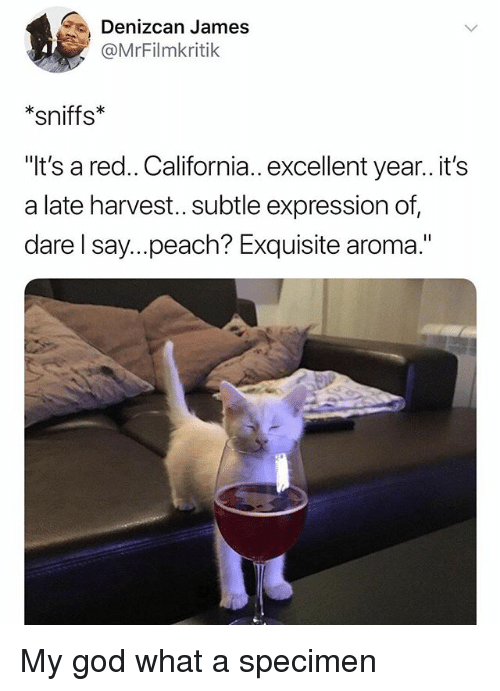 "God, California, and Dank Memes: Denizcan James  @MrFilmkritik  *sniffs  It's a red.. California.. excellent year..it's  a late harvest... subtle expression of,  dare l say...peach? Exquisite aroma."" My god what a specimen"