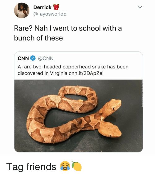 cnn.com, Friends, and School: Derrick  @_ayosworldd  Rare? Nah I went to school with a  bunch of these  CNN@CNN  A rare two-headed copperhead snake has been  discovered in Virginia cnn.it/2DApZei Tag friends 😂🍋