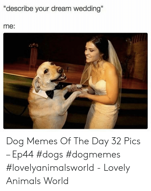"""Animals, Dogs, and Memes: """"describe your dream wedding""""  me: Dog Memes Of The Day 32 Pics – Ep44 #dogs #dogmemes #lovelyanimalsworld - Lovely Animals World"""