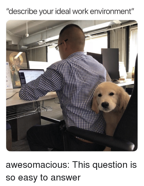 """Tumblr, Work, and Blog: """"describe your ideal work environment""""  10 awesomacious:  This question is so easy to answer"""