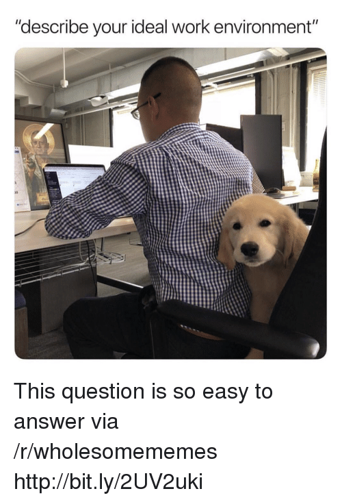 "Work, Http, and Answer: ""describe your ideal work environment""  10 This question is so easy to answer via /r/wholesomememes http://bit.ly/2UV2uki"
