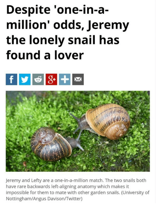 Despite One In A Million Odds Jeremy The Lonely Snail Has Found A