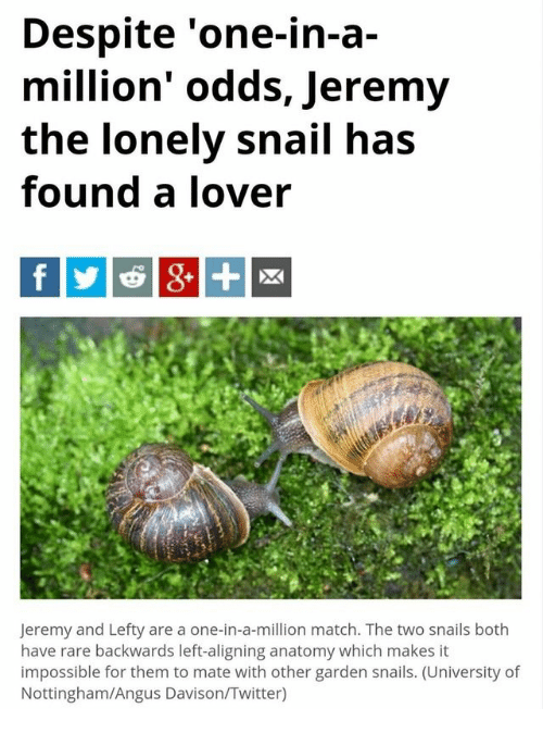 Despite \'One-In-A- Million\' Odds Jeremy the Lonely Snail Has Found a ...