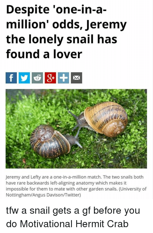 Despite One-In-A Million\' Odds Jeremy the Lonely Snail Has Found a ...