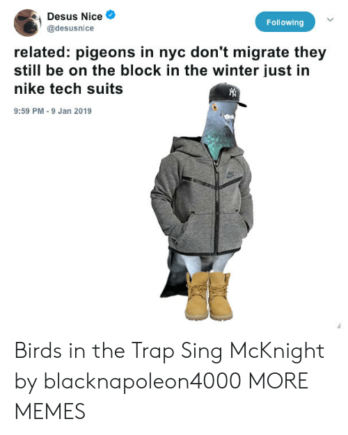 Dank, Memes, and Nike: Desus Nice  @desusnice  Following  related: pigeons in nyc don't migrate they  still be on the block in the winter just in  nike tech suits  9:59 PM 9 Jan 2019 Birds in the Trap Sing McKnight by blacknapoleon4000 MORE MEMES