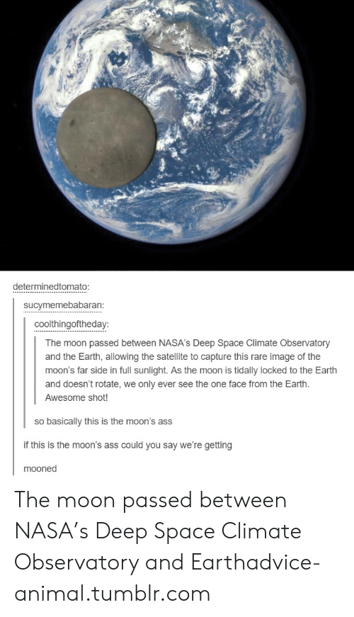 Advice, Nasa, and Tumblr: determinedtomato:  sucymemebabaran:  coolthingoftheday:  The moon passed between NASA's Deep Space Climate Observatory  and the Earth, allowing the satellite to capture this rare image of the  moon's far side in full sunlight. As the moon is tidally locked to the Earth  and doesn't rotate, we only ever see the one face from the Earth.  Awesome shot!  so basically this is the moon's ass  if this is the moon's ass could you say we're getting  mooned The moon passed between NASA's Deep Space Climate Observatory and Earthadvice-animal.tumblr.com