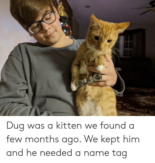 Him, Name, and Kitten: DI Dug was a kitten we found a few months ago. We kept him and he needed a name tag