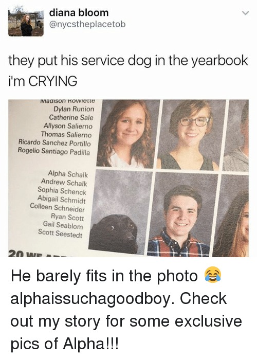 Crying, Memes, and 🤖: diana bloom  anycstheplacetob  they put his service dog in the yearbook  i'm CRYING  Dylan Runion  Catherine Sale  Allyson Salierno  Thomas Salierno  Ricardo Sanchez Portillo  Rogelio Santiago Padilla  Alpha Schalk  Andrew Schalk  Sophia Schenck  Abigail Schmidt  Colleen Schneider  Ryan Scott  Gail Seablom  Scott Seestedt He barely fits in the photo 😂 alphaissuchagoodboy. Check out my story for some exclusive pics of Alpha!!!