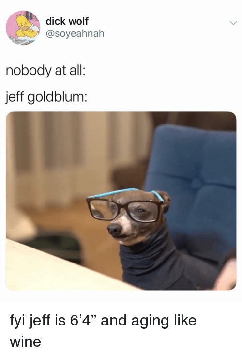"""Memes, Wine, and Dick: dick wolf  @soyeahnah  nobody at all:  jeff goldblum: fyi jeff is 6'4"""" and aging like wine"""