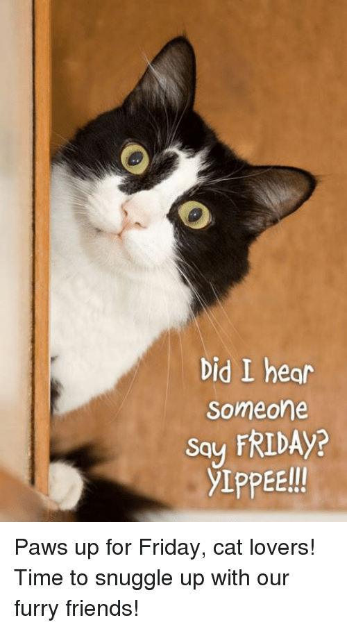 Memes, 🤖, and Furry: Did I hear  Someone  Say FRIDAY? Paws up for Friday, cat lovers! Time to snuggle up with our furry friends!