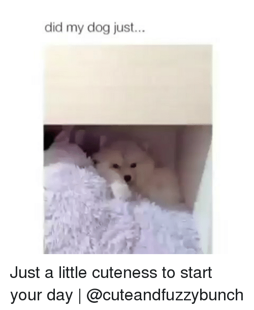 Memes, 🤖, and Dog: did my dog just.. Just a little cuteness to start your day | @cuteandfuzzybunch