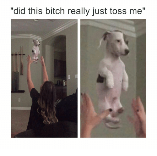 "Bitch, Did, and This: ""did this bitch really just toss me"