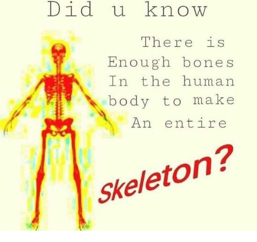 Did U Know There Is Enough Bones In The Human Body To Make An Entire