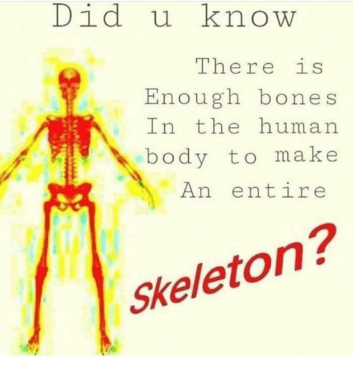 Did U Know There Is Enough Bones in the Human Body to Make an Entire ...