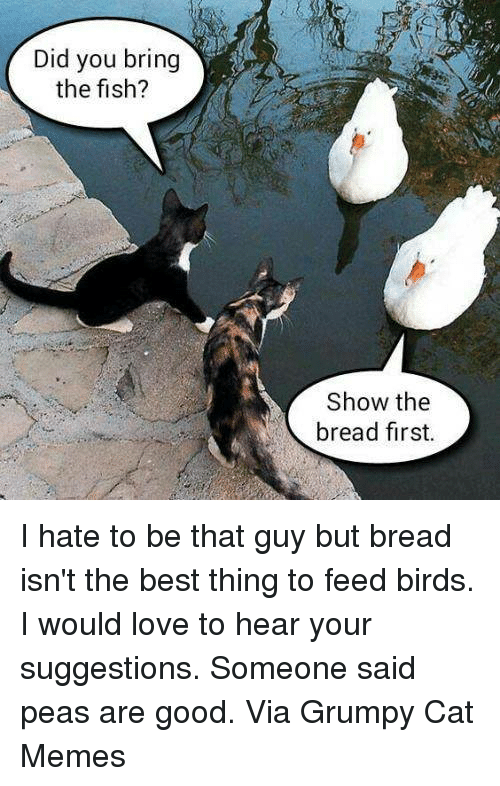 Love, Memes, and Best: Did you bring  the fish?  Show the  bread first. I hate to be that guy but bread isn't the best thing to feed birds. I would love to hear your suggestions. Someone said peas are good. Via Grumpy Cat Memes