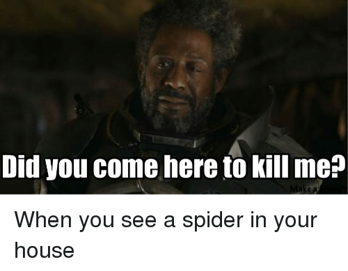 Search dont kill me memes on for How to stop spiders coming in your home