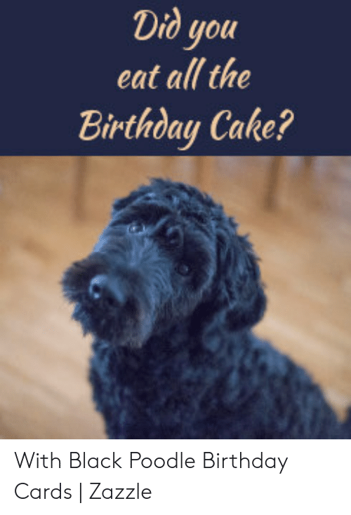 Super Did You Eat All The Birthday Cake With Black Poodle Birthday Funny Birthday Cards Online Aeocydamsfinfo