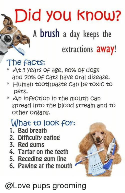 Did You Know A Brush Day Keeps The Extractions Away