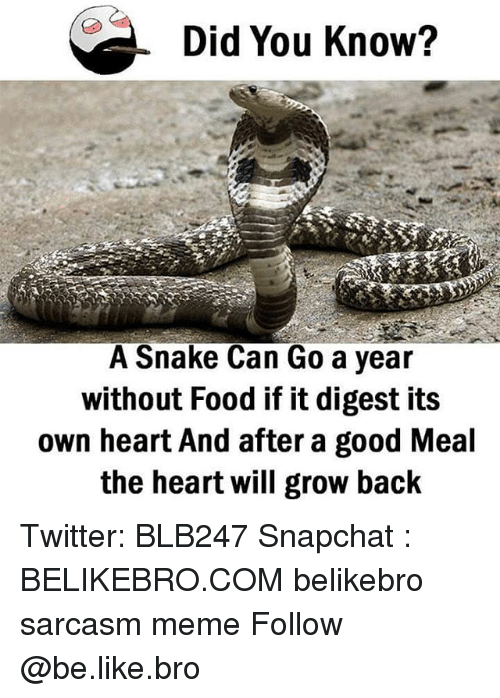 Be Like, Food, and Meme: Did You Know?  A Snake Can Go a year  without Food if it digest its  own heart And after a good Meal  the heart will grow back Twitter: BLB247 Snapchat : BELIKEBRO.COM belikebro sarcasm meme Follow @be.like.bro