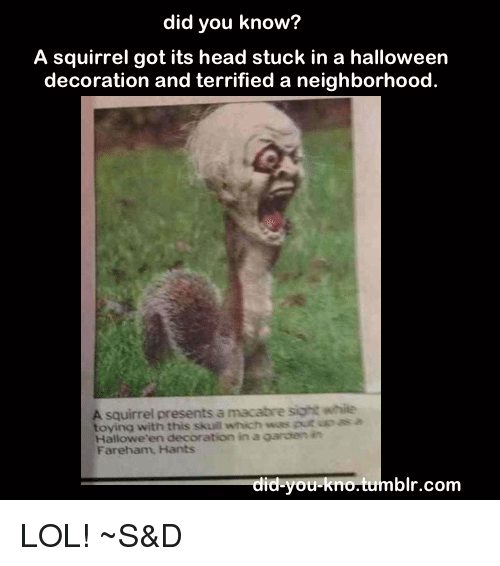 Did You Know A Squirrel Got Its Head Stuck In A Halloween