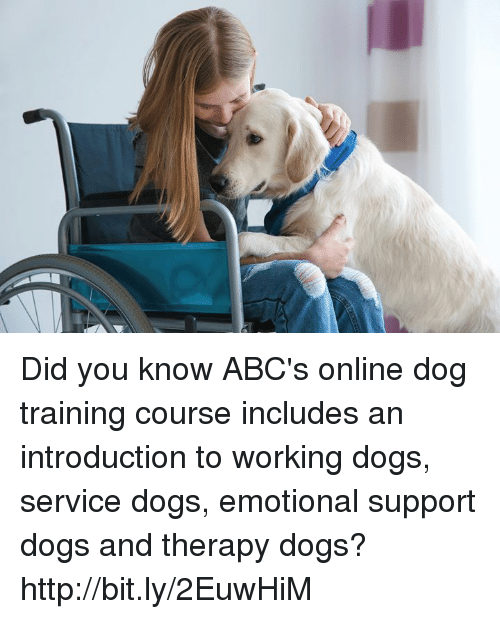 Emotional Support Dog Training