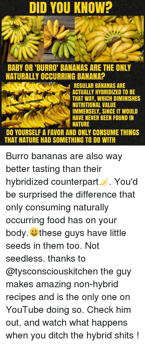 DID YOU KNOW? BABY OR 'BURRO' BANANAS ARE THE ONLY NATURALLY