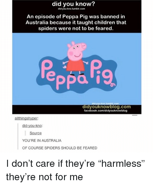 "Children, Facebook, and Memes: did you know?  did-you-kno.tumbir.com  An episode of Peppa Pig was banned in  Australia because it taught children that  spiders were not to be feared.  facebook.com/didyouknowblog  allthingshyper  did-you-kno:  Source  YOU'RE IN AUSTRALIA  OF COURSE SPIDERS SHOULD BE FEARED I don't care if they're ""harmless"" they're not for me"