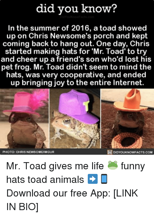 Memes, 🤖, and Joy: did you know?  In the summer of 2016, a toad showed  up on Chris Newsome's porch and kept  coming back to hang out. One day, Chris  started making hats for Mr. Toad to try  and cheer up a friend's son who'd lost his  pet frog. Mr. Toad didn't seem to mind the  hats, was very cooperative, and ended  up bringing joy to the entire Internet.  PHOTO: CHRIS NEWSOME MGUR  DIDYOUKNOWFACTS COM Mr. Toad gives me life 🐸 funny hats toad animals ➡📱Download our free App: [LINK IN BIO]