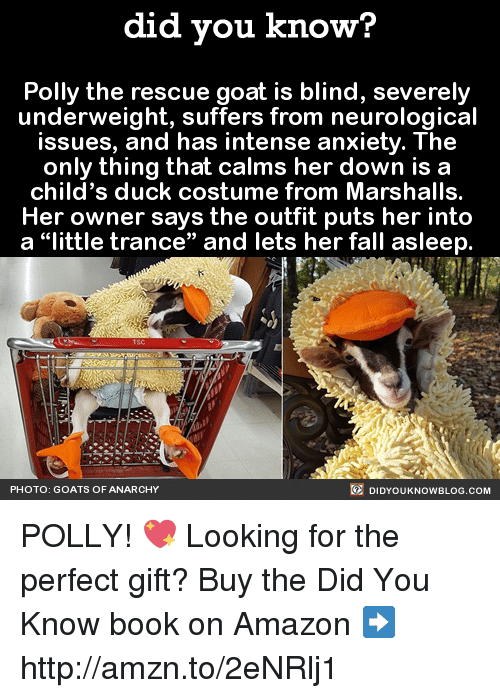 Best Memes About GOAT GOAT Memes - Rescue goat suffers anxiety calms duck costume