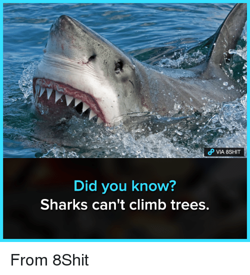 Funny, Sharks, and Trees: Did you know?  Sharks can't climb trees, From 8Shit