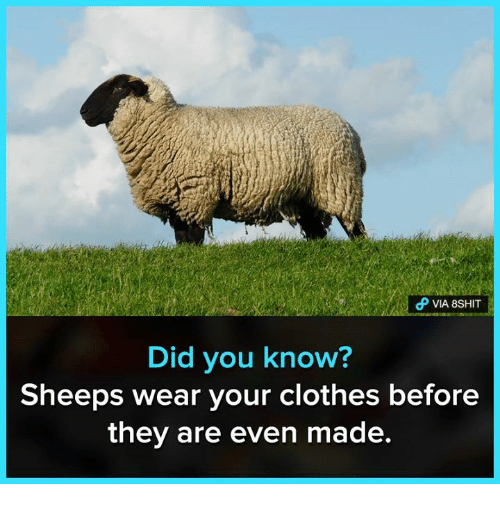 Clothes, Memes, and 🤖: Did you know?  Sheeps wear your clothes before  they are even made.