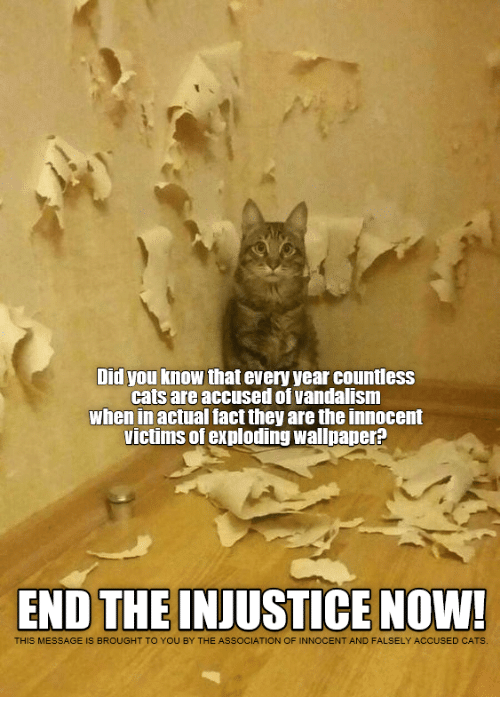 Cats, Wallpaper, and Vandalism: Did you know that every year countless  cats are accused of vandalism  when in actual fact they are the innocent  victims of exploding wallpaper?  END THE INJUSTICE NOW!  THIS MESSAGE IS BROUGHT TO YOU BY THE ASSOCIATION OF INNOCENT AND FALSELY ACCUSED CATS