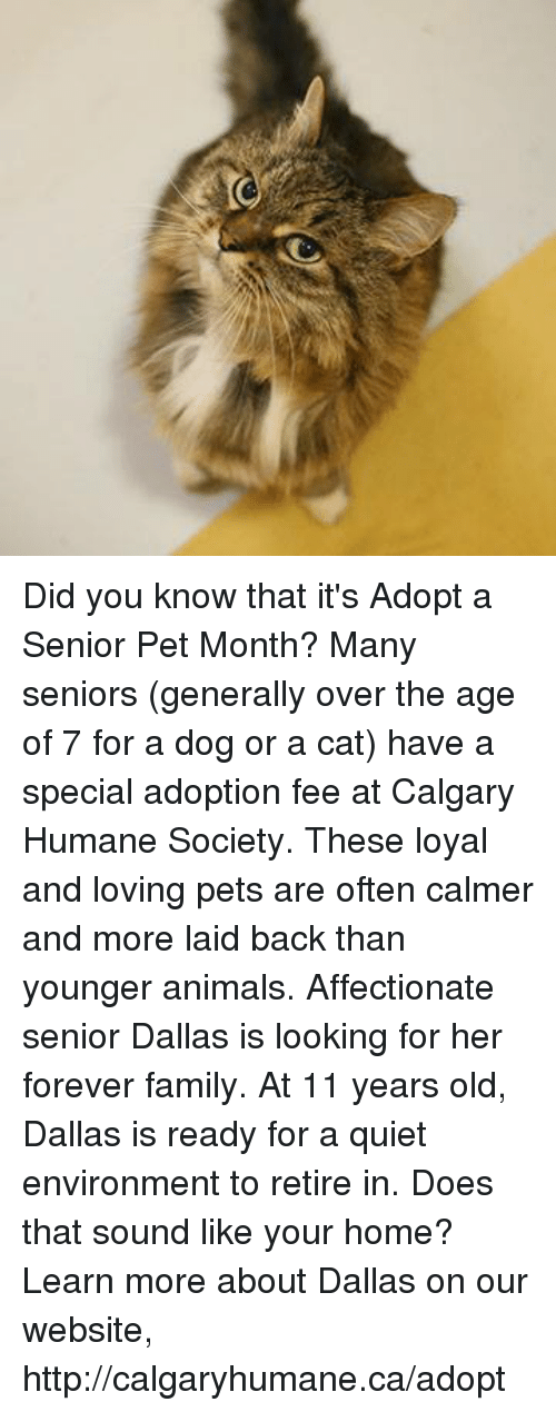 Did You Know That It's Adopt a Senior Pet Month? Many