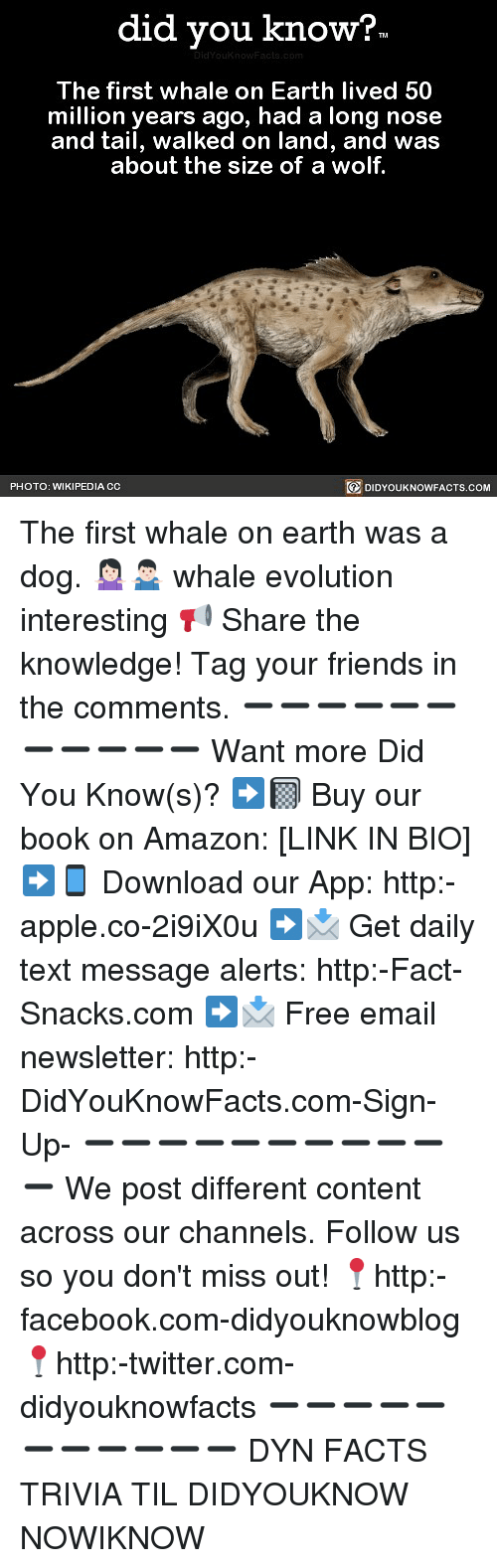 Amazon, Apple, and Facebook: did you know?  The first whale on Earth lived 50  million years ago, had a long nose  and tail, walked on land, and was  about the size of a wolf.  PHOTO: WIKIPEDIA CC  DIDYOUKNOWFACTS.COM The first whale on earth was a dog. 🤷🏻♀️🤷🏻♂️ whale evolution interesting 📢 Share the knowledge! Tag your friends in the comments. ➖➖➖➖➖➖➖➖➖➖➖ Want more Did You Know(s)? ➡📓 Buy our book on Amazon: [LINK IN BIO] ➡📱 Download our App: http:-apple.co-2i9iX0u ➡📩 Get daily text message alerts: http:-Fact-Snacks.com ➡📩 Free email newsletter: http:-DidYouKnowFacts.com-Sign-Up- ➖➖➖➖➖➖➖➖➖➖➖ We post different content across our channels. Follow us so you don't miss out! 📍http:-facebook.com-didyouknowblog 📍http:-twitter.com-didyouknowfacts ➖➖➖➖➖➖➖➖➖➖➖ DYN FACTS TRIVIA TIL DIDYOUKNOW NOWIKNOW