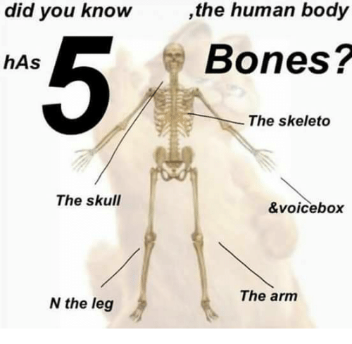 Did you know the human body bones has the skeleto the skull bones dank and skull did you know the human body bones ccuart Image collections