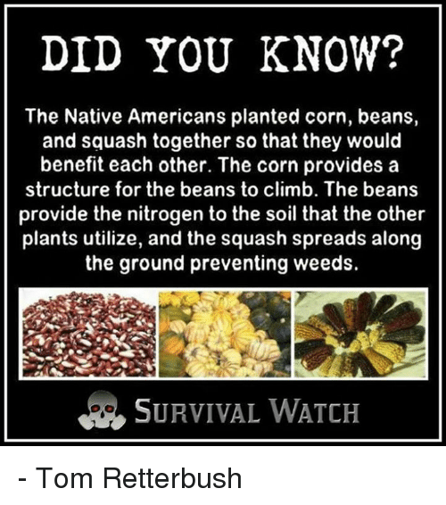 DID YOU KNOW? The Native Americans Planted Corn Beans and