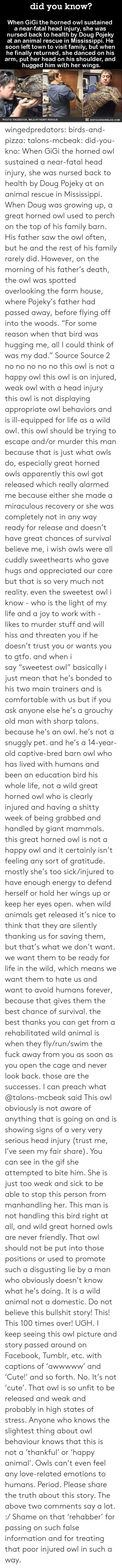 """Animals, Apparently, and Comfortable: did you know?  When GiGi the horned owl sustained  a near-fatal head injury, she was  nursed back to health by Doug Pojeky  at an animal rescue in Mississippi. He  soon left town to visit family, but when  he finally returned, she danced on his  arm, put her head on his shoulder, and  hugged him with her wings.  PHOTO: FACEBOOK, WILD AT HEART RES CUE  DIDYOUKNOWBLOG.COM wingedpredators: birds-and-pizza:  talons-mcbeak:  did-you-kno:  When GiGi the horned owl sustained  a near-fatal head injury, she was  nursed back to health by Doug Pojeky  at an animal rescue in Mississippi. When Doug was growing up, a great horned owl used to perch on the top of his family barn. His father saw the owl often, but he and the rest of his family rarely did. However, on the morning of his father's death, the owl was spotted overlooking the farm house, where Pojeky's father had passed away, before flying off into the woods. """"For some reason when that bird was hugging me, all I could think of was my dad."""" Source Source 2  no no no no no this owl is not a happy owl this owl is an injured, weak owl with a head injury this owl is not displaying appropriate owl behaviors and is ill-equipped for life as a wild owl. this owl should be trying to escape and/or murder this man because that is just what owls do, especially great horned owls apparently this owl got released which really alarmed me because either she made a miraculous recovery or she was completely not in any way ready for release and doesn't have great chances of survival believe me, i wish owls were all cuddly sweethearts who gave hugs and appreciated our care but that is so very much not reality. even the sweetest owl i know - who is the light of my life and a joy to work with - likes to murder stuff and will hiss and threaten you if he doesn't trust you or wants you to gtfo. and when i say""""sweetest owl"""" basically i just mean that he's bonded to his two main trainers and is comfortable with u"""
