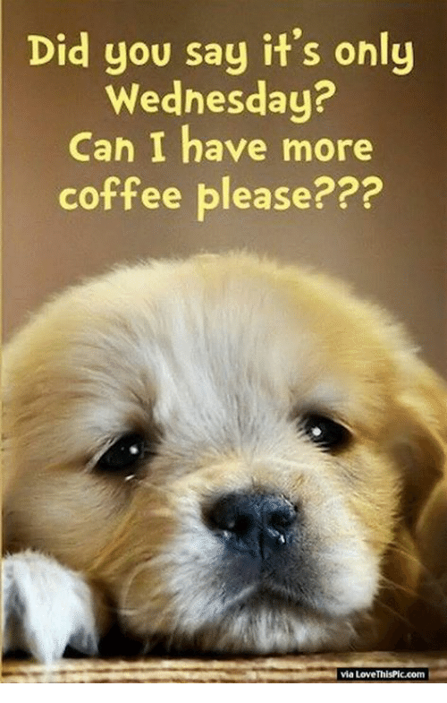 did you say its only wednesday can i have more 25553806 did you say it's only wednesday? can i have more coffee please