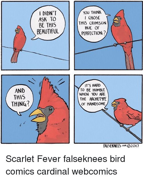 Beautiful, Memes, and Humble: DIDN'T  ASK TO  BE THIS  BEAUTIFUL  YOU THINK  CHOSE  THIS CRIMSON  HUE OF  PERFECTION?  IT'S HARD  TO BE HUMBLE  WHEN YOU ARE  THE ARCHETYPE  OF HANDSOME  AND  AND  THIS  THING?  TALSE KNEES .coM Θ2017 Scarlet Fever falseknees bird comics cardinal webcomics