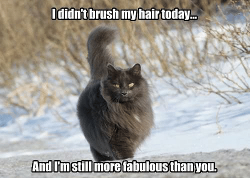 Didn't Brush My Hair Today and Imstillmorefabulousthan You | Meme ...