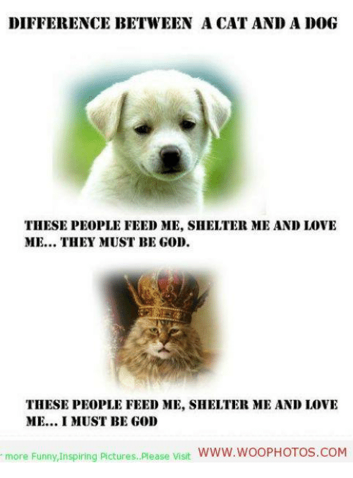 DIFFERENCE BETWEEN A CAT AND ADOG THESE PEOPLE FEED ME SHELTER ME Custom Funny Inspiration