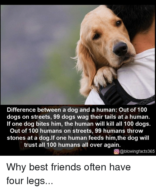 Tails Memes Anaconda Dogs And Friends Difference Between A Dog Human Out