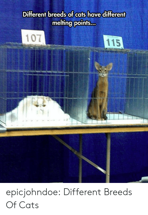 Cats, Tumblr, and Blog: Different breeds of cats have different  melting points...  107  115 epicjohndoe:  Different Breeds Of Cats