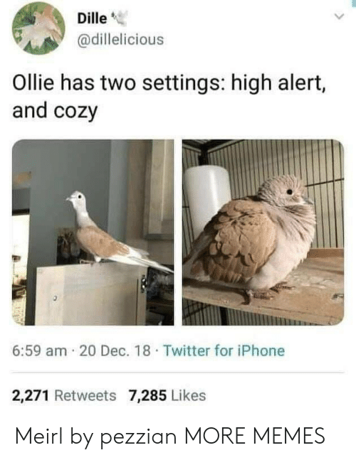 """Dank, Iphone, and Memes: Dille""""  @dillelicious  Ollie has two settings: high alert,  and cozy  6:59 am 20 Dec. 18 Twitter for iPhone  2,271 Retweets 7,285 Likes Meirl by pezzian MORE MEMES"""