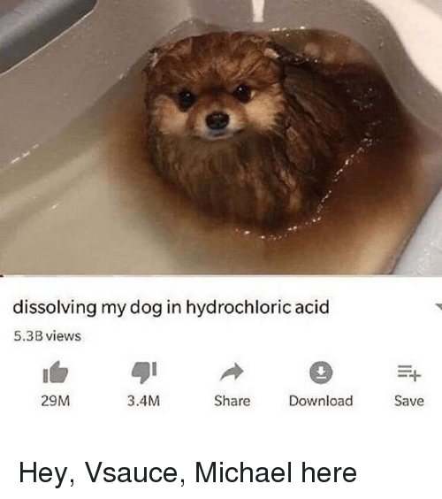 Reddit, Michael, and Dog: dissolving my dog in hydrochloric acid  5.3B views  29M  3.4M  Share  Download  Save
