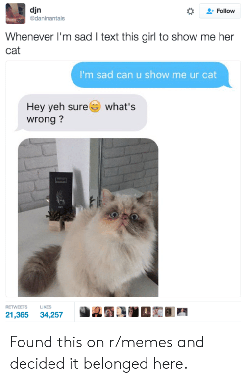 Memes, Girl, and Text: djn  daninantais  *  으. Follow  Whenever I'm sad I text this girl to show me her  cat  I'm sad can u show me ur cat  Hey yeh sure  wrong?  what's  RETWEETS LIKES  21,365 34,257 Found this on r/memes and decided it belonged here.