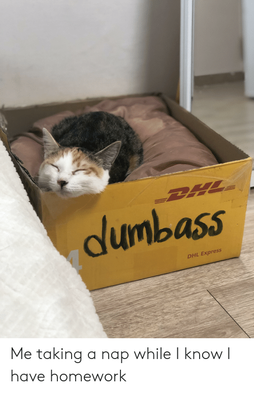 Dlunbass DHL Express Me Taking a Nap While I Know I Have Homework